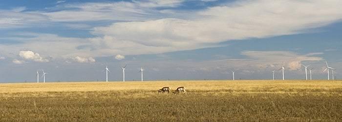 Pronhorn Antelope and Power Generators